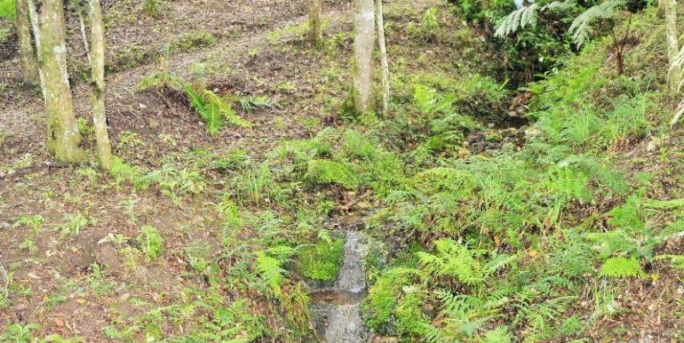 terreno-lamenha-pequena-12